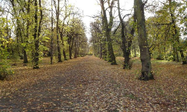 Alexandra Park trees